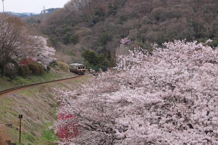 桜 PlayBack ~列車とのコラボ~_b0369971_10553026.jpg