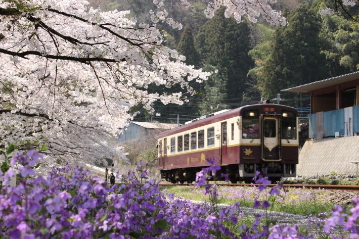 桜 PlayBack ~列車とのコラボ~_b0369971_10592446.jpg