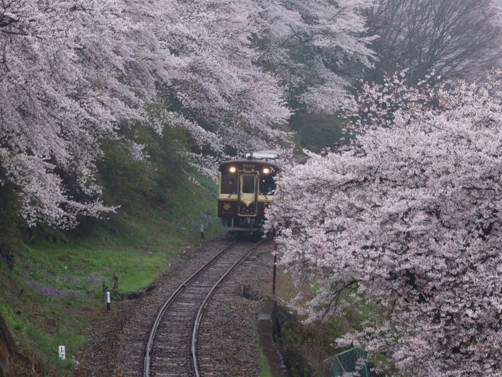 桜 PlayBack ~列車とのコラボ~_b0369971_11020480.jpg