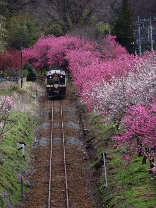 桜 PlayBack ~列車とのコラボ~_b0369971_11040875.jpg
