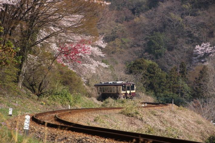 桜 PlayBack ~列車とのコラボ~_b0369971_12505306.jpg