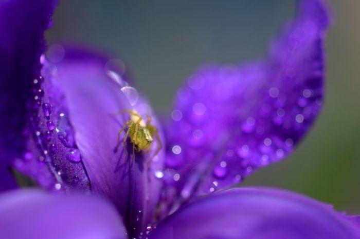 小雨の後は_f0368583_18274990.jpg