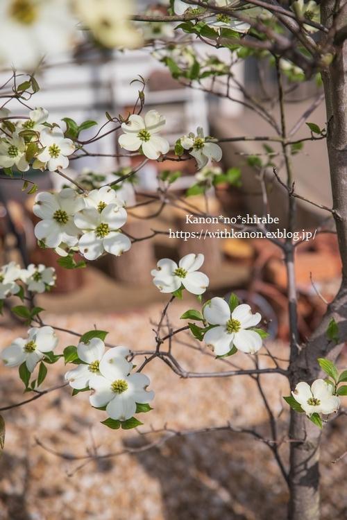White&Green garden_d0148187_14430143.jpg