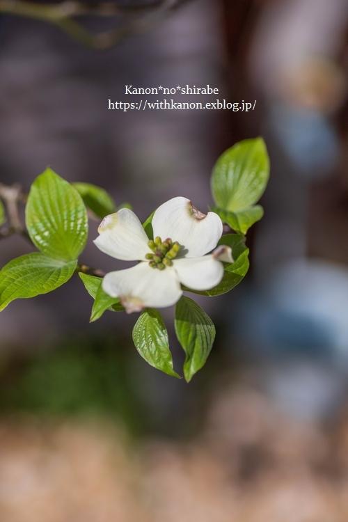 White&Green garden_d0148187_14430380.jpg