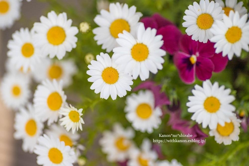 White&Green garden_d0148187_14430708.jpg