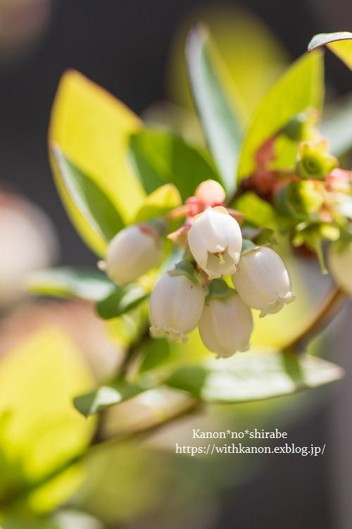 White&Green garden_d0148187_14431063.jpg