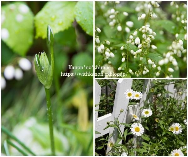 White&Green garden_d0148187_14431323.jpg