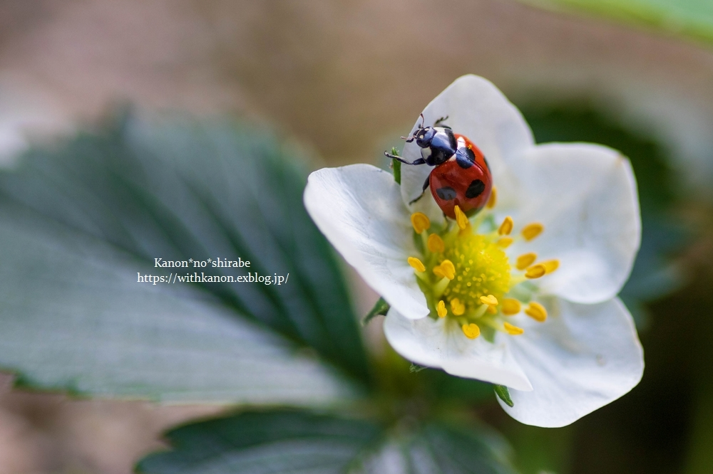 White&Green garden_d0148187_14431612.jpg