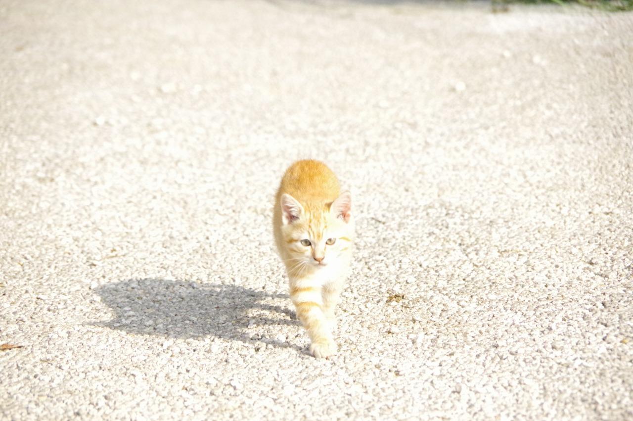 OKINAWA CATWALK SHOW_b0078188_17295795.jpg