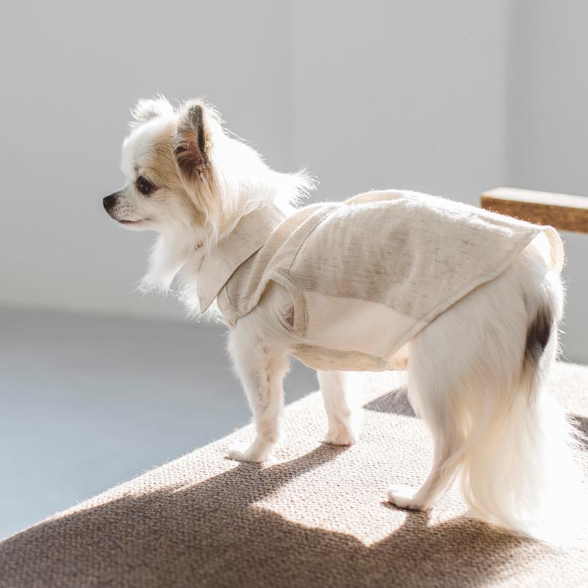☆ New Dog Wear ☆_d0060413_14084559.jpg