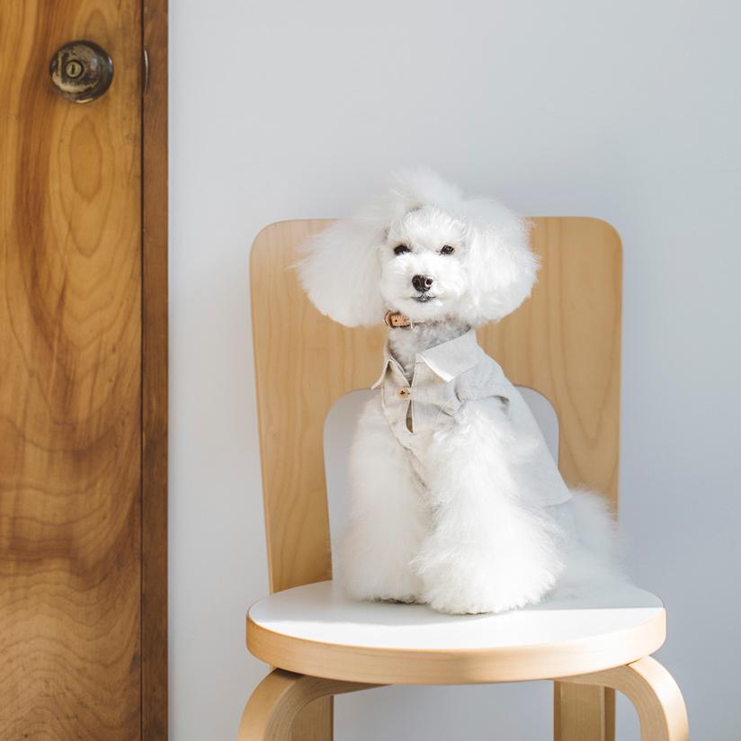 ☆ New Dog Wear ☆_d0060413_14085097.jpg