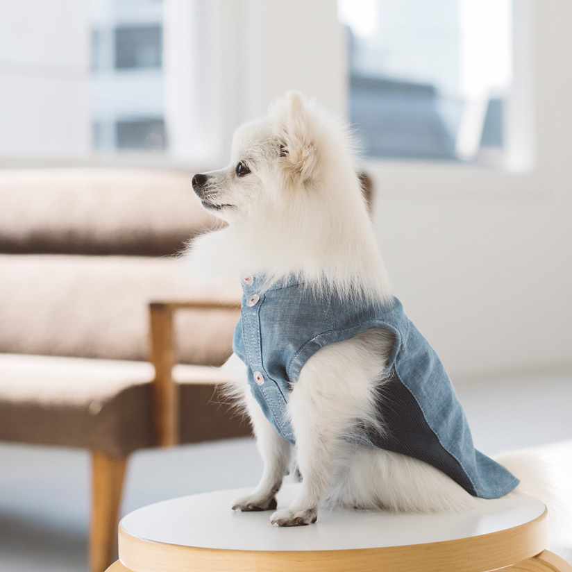 ☆ New Dog Wear ☆_d0060413_14085415.jpg