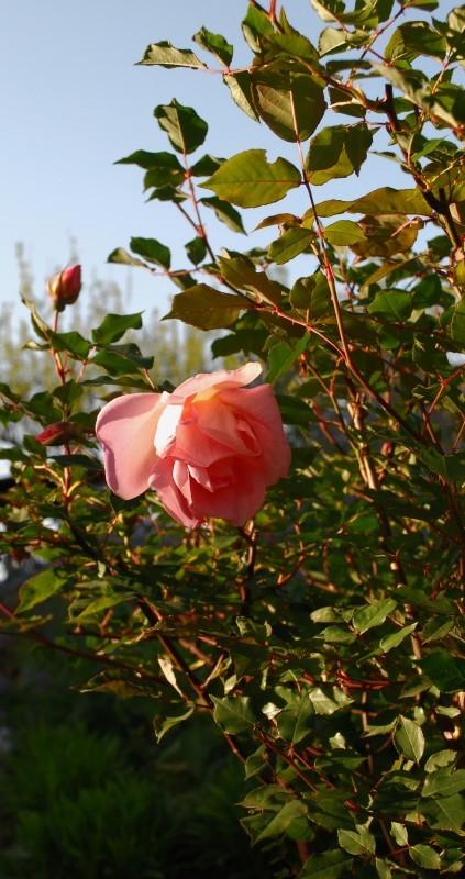 4月の庭_b0280025_23123319.jpg