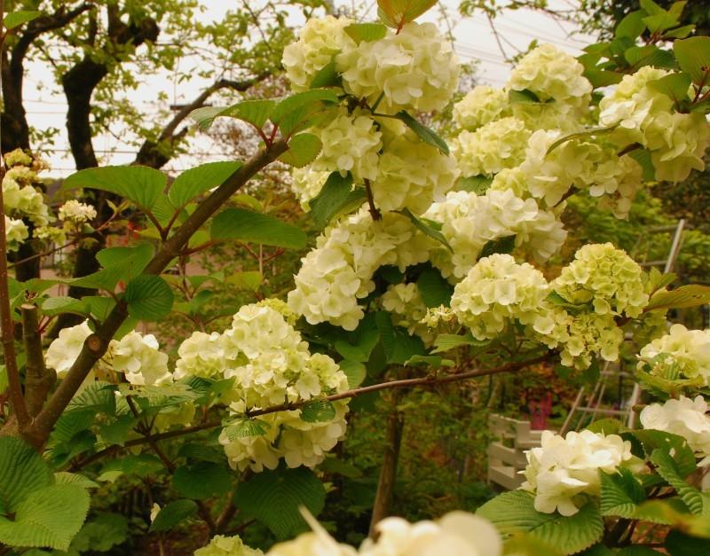 4月の庭_b0280025_23413465.jpg