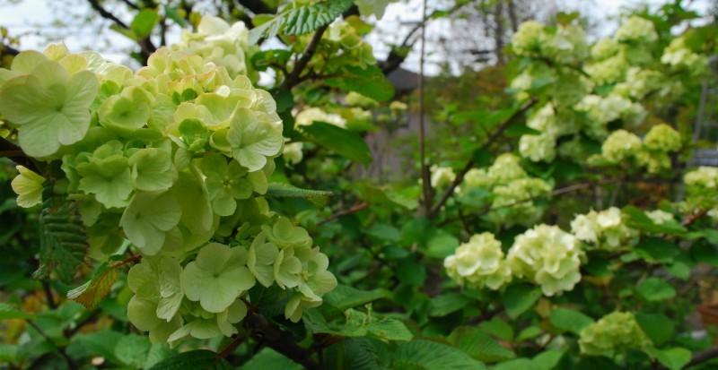 4月の庭_b0280025_23431138.jpg