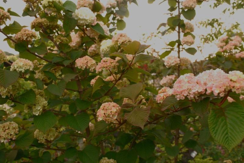 4月の庭_b0280025_23471611.jpg