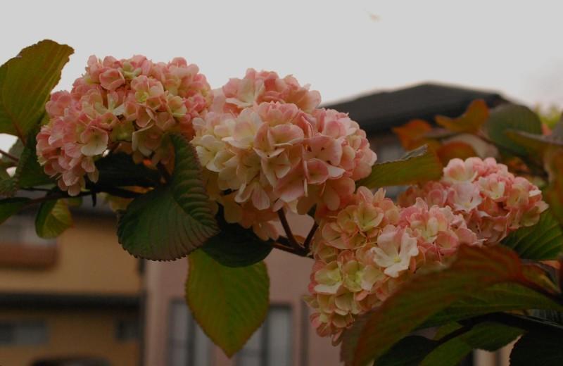 4月の庭_b0280025_23474952.jpg