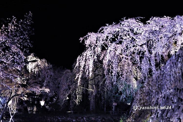 「入園禁止」弘前公園 _b0343543_15524465.jpg