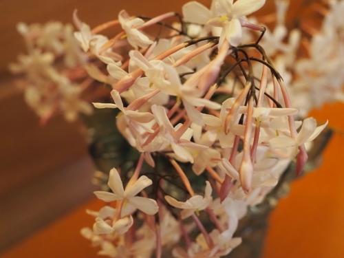 四月の甘い香りは未知への誘い_a0279858_16430614.jpg