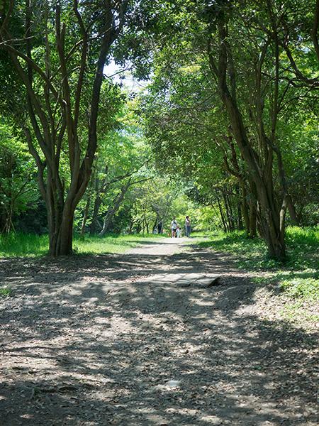 緑陰の道。_b0022268_18553733.jpg