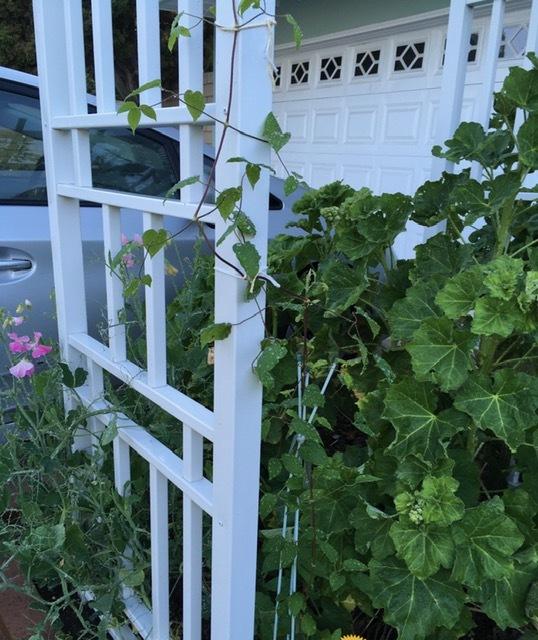 初夏の花咲く庭ーフォックスグローブ、スイートピー、アイリスなどなど_e0350971_23263486.jpg