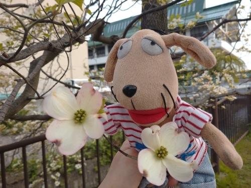 春の日_c0158573_07281176.jpg