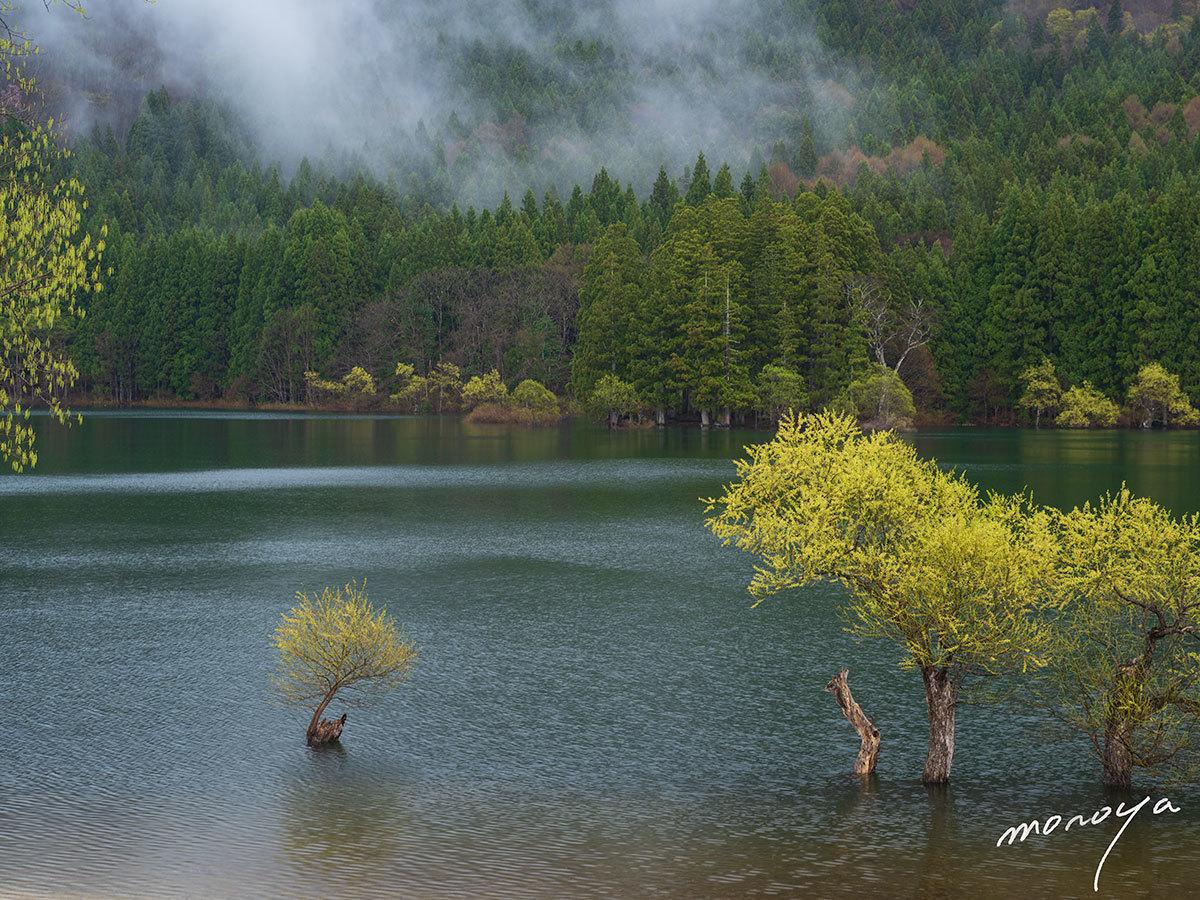 新緑の湖_c0085877_05461758.jpg