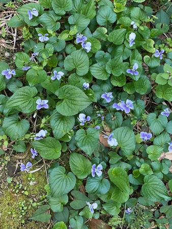 4月の庭 2020 - 2_f0239100_21115810.jpg