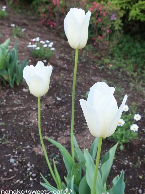 白い花*白藤_d0147030_20345828.jpg