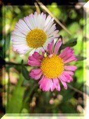 それでも 花は咲く・・・・。_e0054438_13292477.jpg
