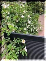 それでも 花は咲く・・・・。_e0054438_13323668.jpg