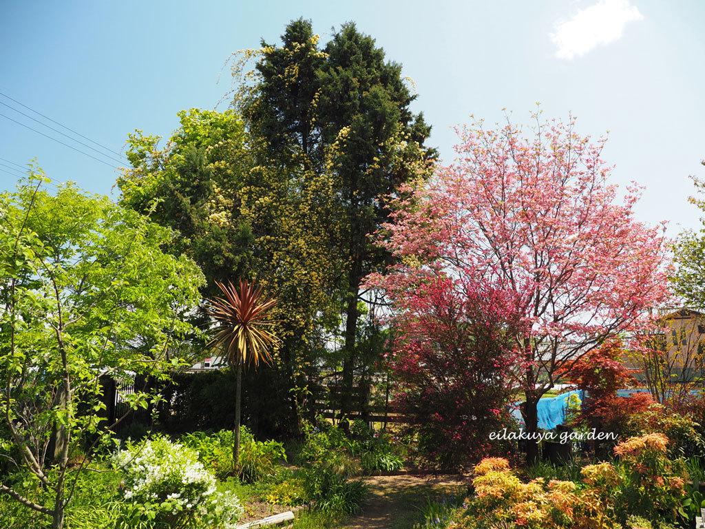 庭の変化と調和_b0133243_17075265.jpg