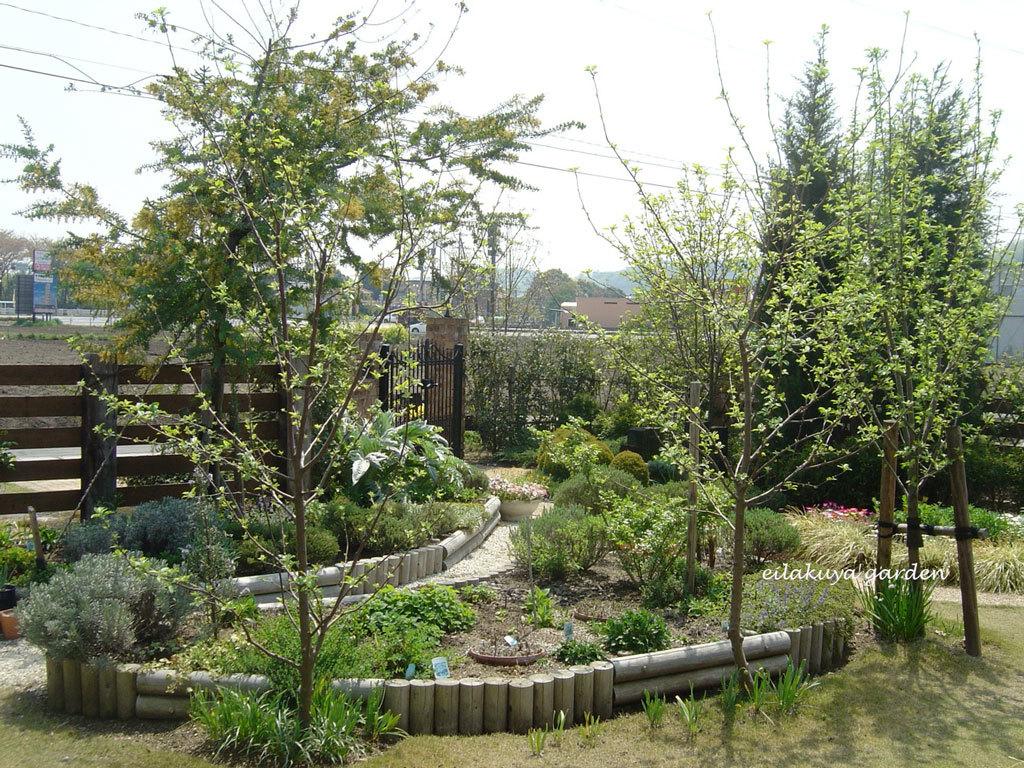 庭の変化と調和_b0133243_17085034.jpg