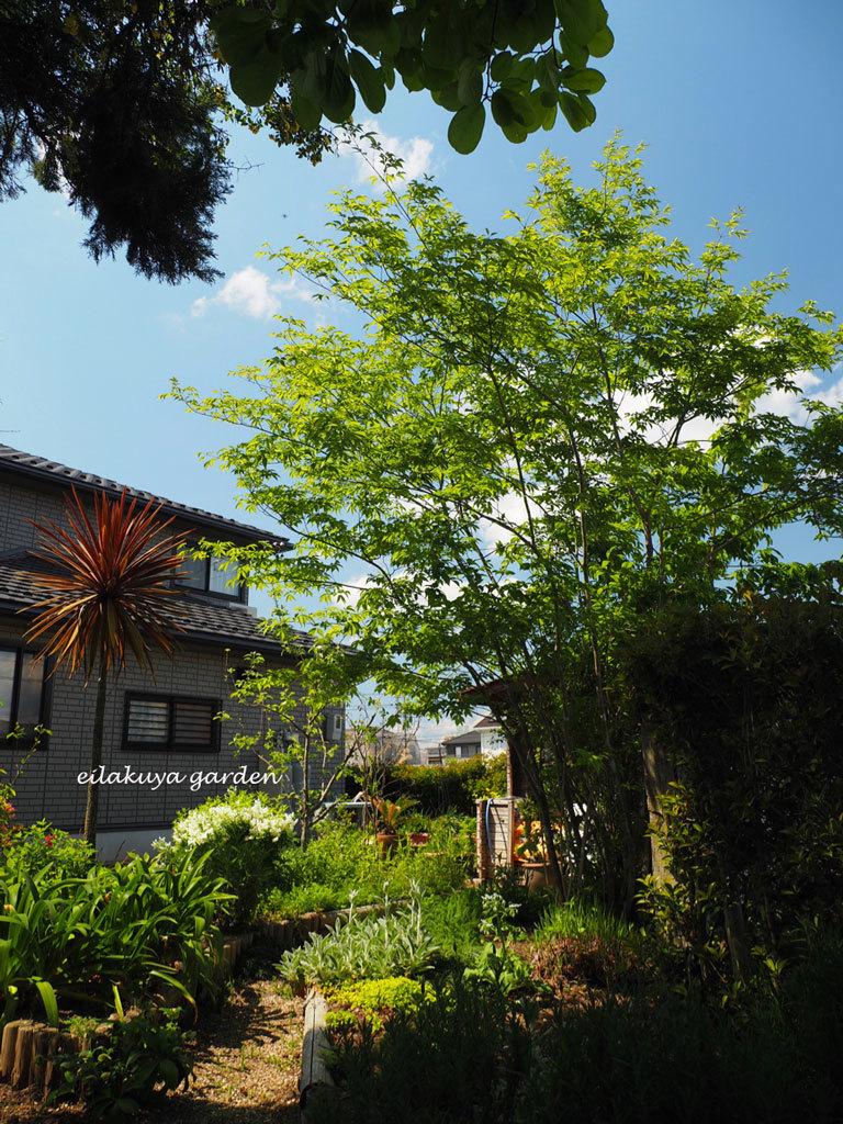 庭の変化と調和_b0133243_17144475.jpg
