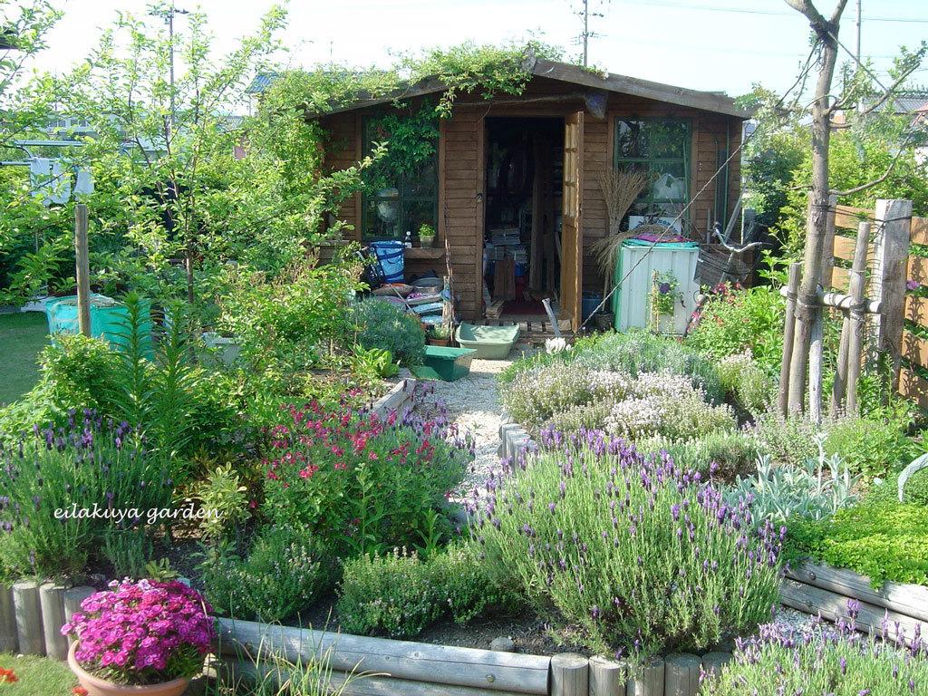庭の変化と調和_b0133243_17173310.jpg