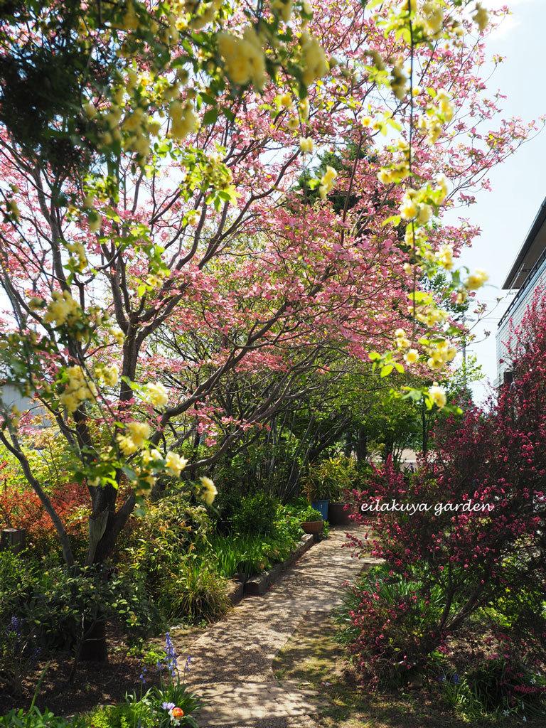 庭の変化と調和_b0133243_17185180.jpg
