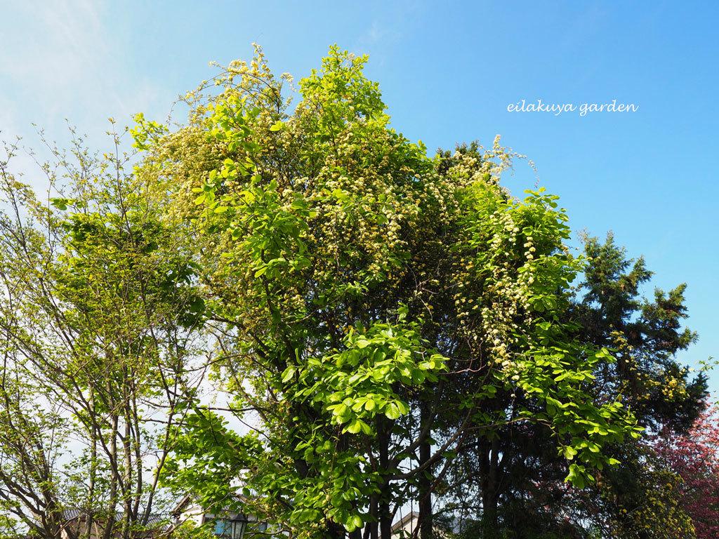 庭の変化と調和_b0133243_17265747.jpg