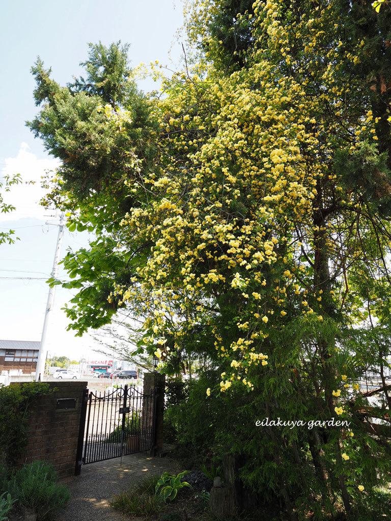 庭の変化と調和_b0133243_17270064.jpg