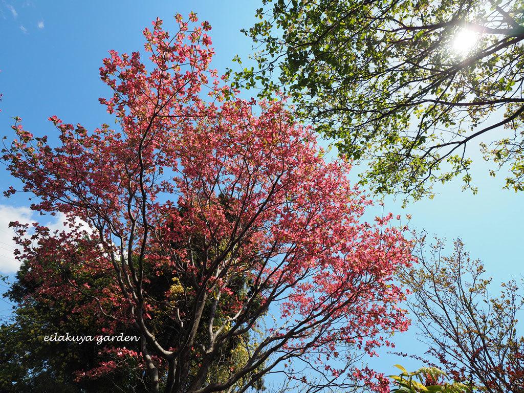 庭の変化と調和_b0133243_17275064.jpg