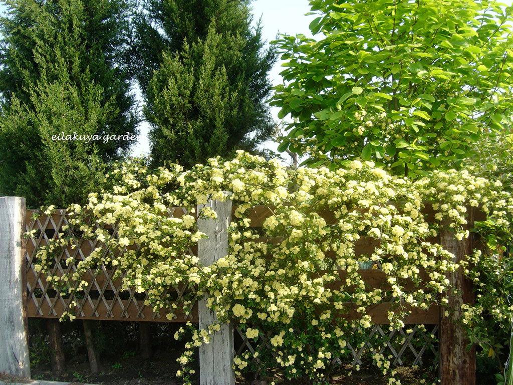 庭の変化と調和_b0133243_17295477.jpg