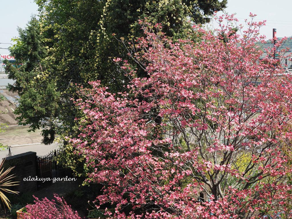 庭の変化と調和_b0133243_17353759.jpg