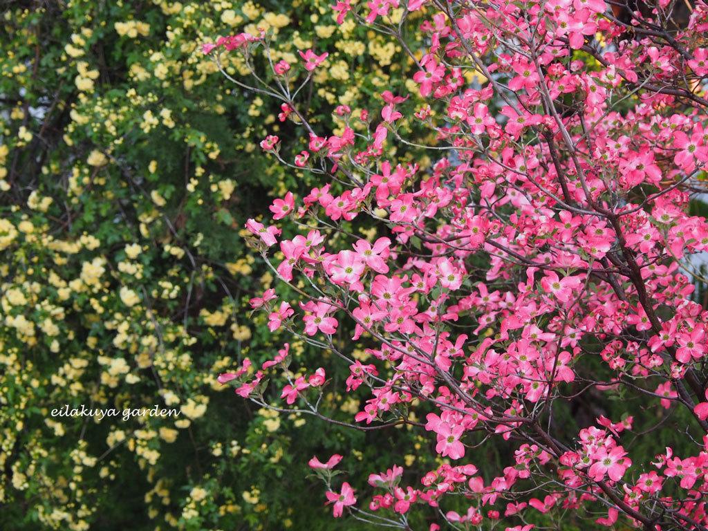 庭の変化と調和_b0133243_17360843.jpg