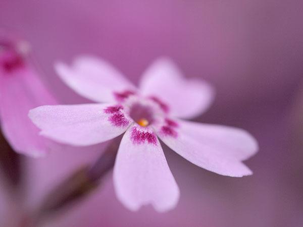 季節は巡りて春になり_e0022047_23293091.jpg