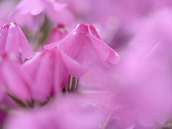 季節は巡りて春になり_e0022047_23294392.jpg