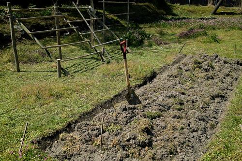 下針畑、サクラとヤマナシ・・・オクヤマガーデン_d0005250_18434752.jpg