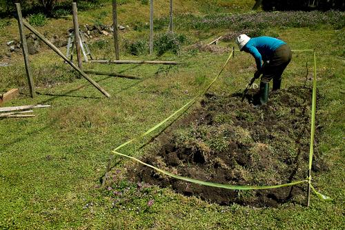 下針畑、サクラとヤマナシ・・・オクヤマガーデン_d0005250_18443263.jpg