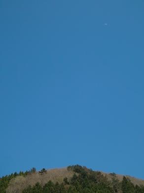 下針畑、サクラとヤマナシ・・・オクヤマガーデン_d0005250_18472376.jpg