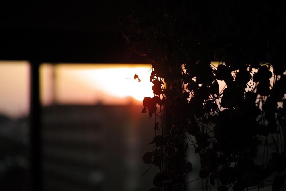 燃える夕陽_d0349265_17532380.jpg