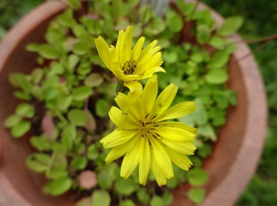 庭の花 春その8(雑草2)_f0059673_18411142.jpg