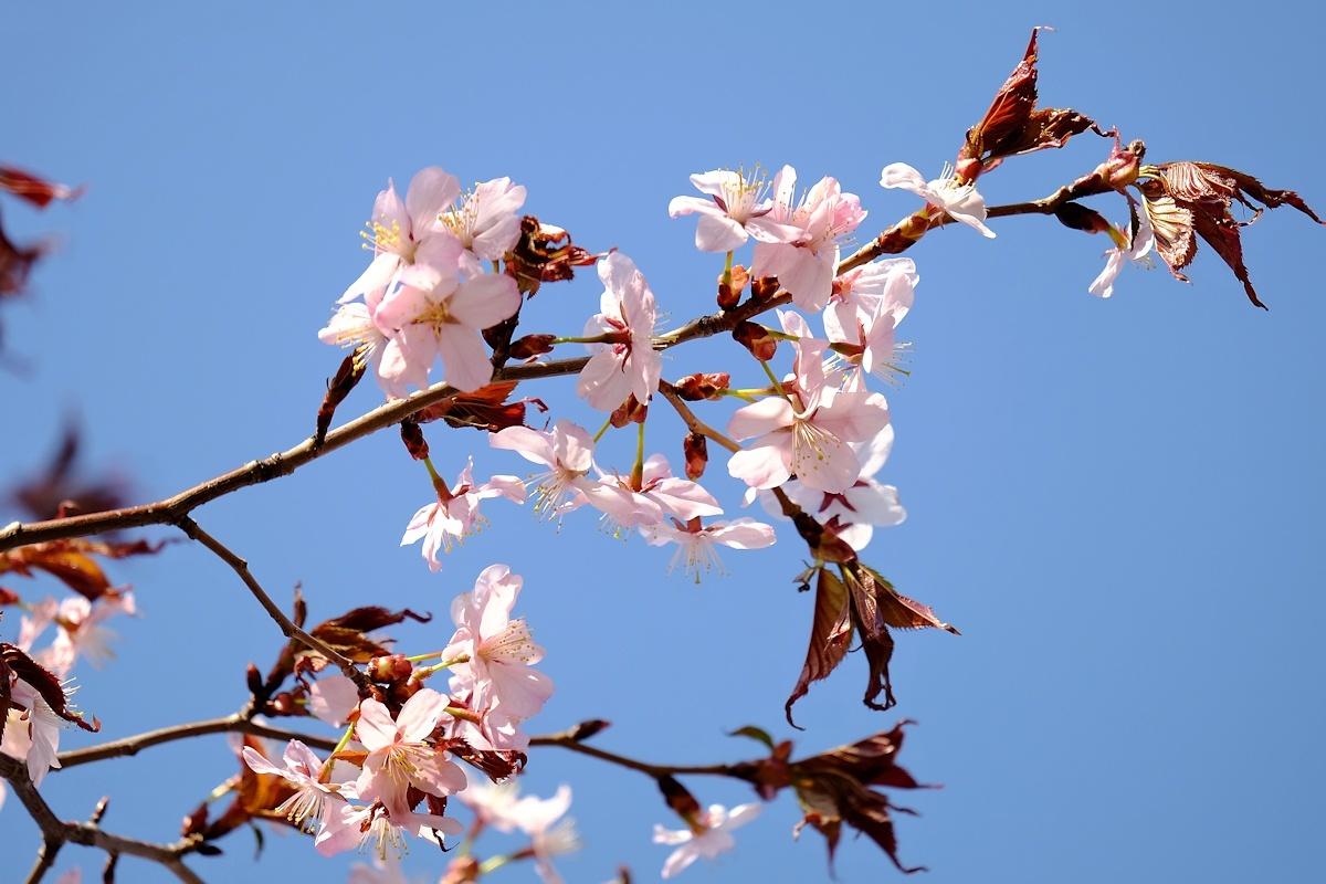 桜四月散歩道_e0051186_17312081.jpg